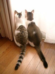 並んで窓の外を見る