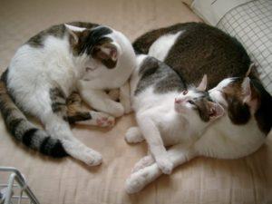 3匹で添い寝