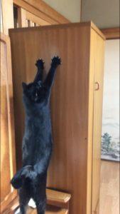 背伸びする黒猫